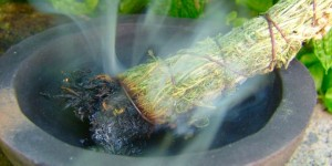 herbs_smudging_cleansing_clearing_OMTimes